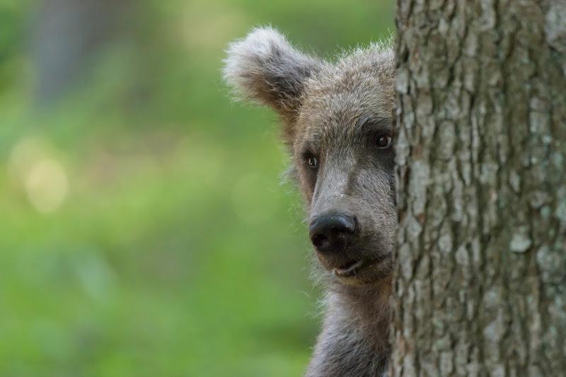 Vietato dar da mangiare agli orsi di Massimo_Tamajo