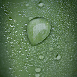 droplet by Sheena True - Nature Up Close Water ( www.simplytrueimages.com )