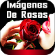 Download Hermosas Imágenes De Rosas Naturales Gratis For PC Windows and Mac