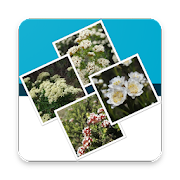 App Icon for Key to the Cassinia group App in Czech Republic Google Play Store