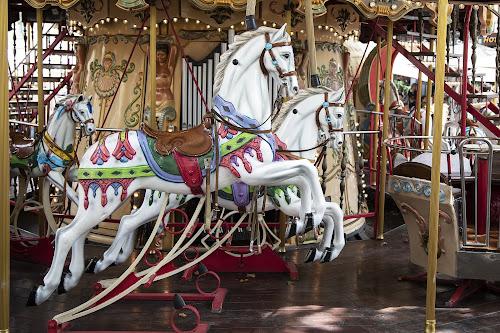 Cavalli inseparabili di ped1_dom