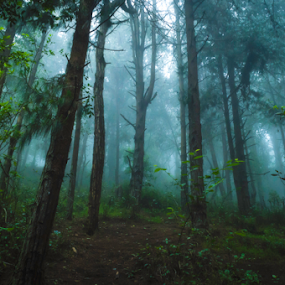 Kodai Forest by Dharmesh Daula - Landscapes Forests