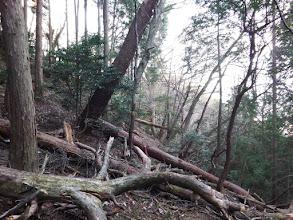 右斜面をトラバース(倒木が多い)