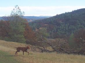Photo: Royce tirelessly exploring, Cache Creek Wildlife Area, Redbud Trail.