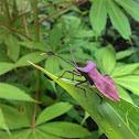 Bug / Beetle