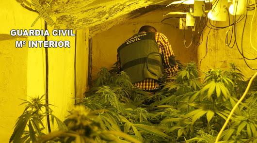 Tres detenidos en Albox por usar la vivienda de dos ancianos para cultivar maría