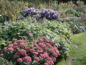 Photo: Gorgeous perennial border.