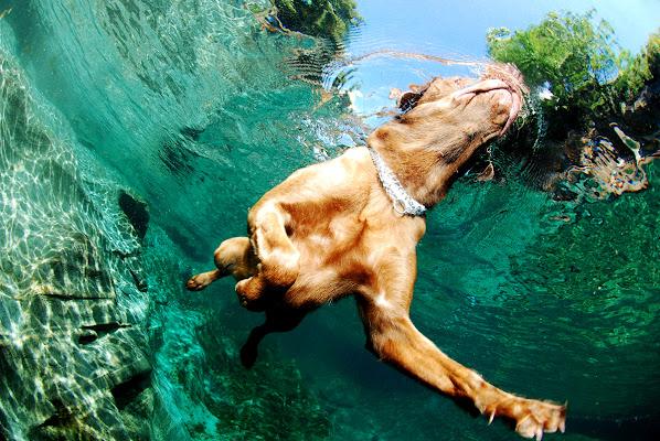 Swimmer Dog di stellastyles.com / Stella Del Curto