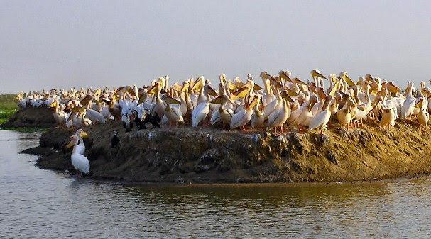 Santuário Aves