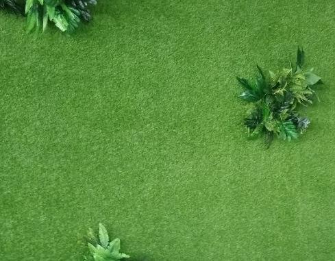 Sự phổ biến hơn của cỏ sân vườn là hướng đi ngày nay