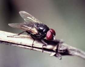 Photo: a macro from the past!