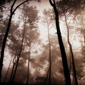 Nature Up close by Ashish Bikram Thapa - Nature Up Close Trees & Bushes ( cold, bushes, trees, leaves, climate, branches )