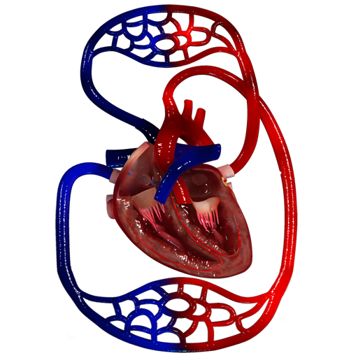 VR Blood Circulation