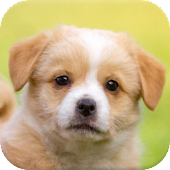 Puppy Puzzle Dog Games