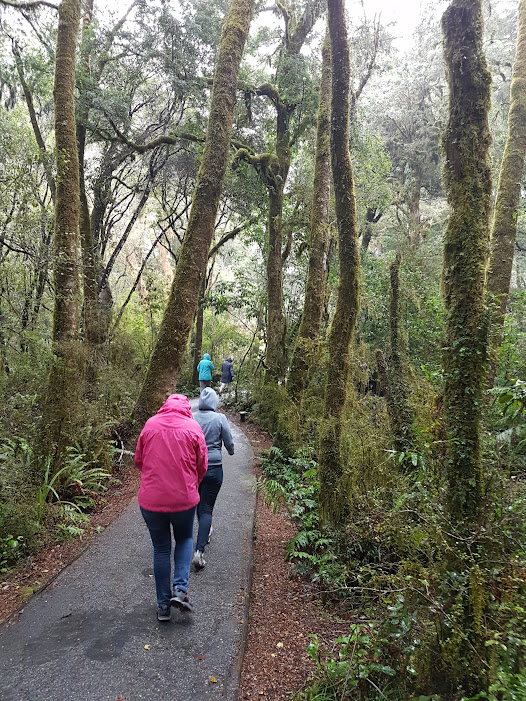 running through New Zealand rain forest