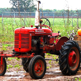 Red Tractor by Grady  Welch - Transportation Other ( red, hay, vibrant, pumpkins, tractor )