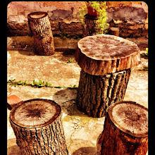 Photo: Five old stumps #intercer #outdoors #stump - via Instagram, http://instagr.am/p/LXuhetJfvc/