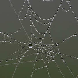 droplets on a spider web by Jeff Sluder - Nature Up Close Webs