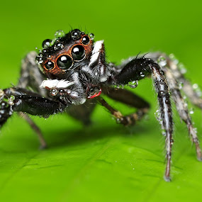 by Reeve Lim - Animals Insects & Spiders