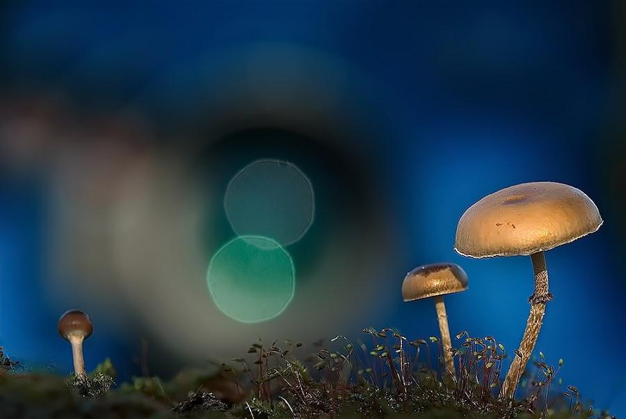by Yulian Amin - Nature Up Close Mushrooms & Fungi
