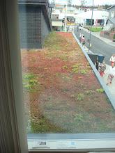 Photo: Katolla kasvoi jotain punertavaa. Muuten ihan jees, mut kuka luo tuolta lumet?