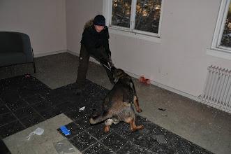 Photo: Kahn leker med figurant Hanne