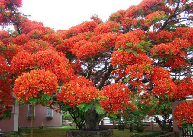 1_amazing-trees-10.jpg