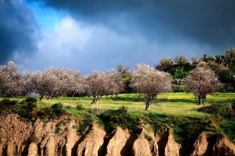 Inizio di primavera di Fiorenza Aldo Photo