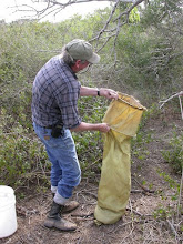 Photo: Sifting pack rat midden material - Best not to inhale centuries old dried pack rat excrement...