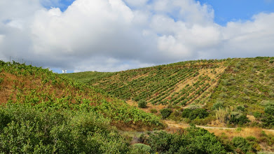 Photo: Those are some steep vineyards!