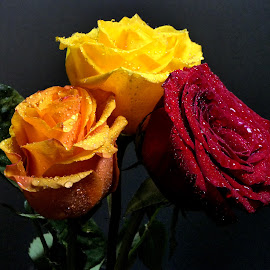 Orange Yellow, and Red Roses by Dave Walters - Flowers Flower Arangements ( macro, mystical, nature, orange yellow, and red roses, flowers, colors lumix fz2500,  )