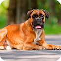 Boxer Dog Pack 2 Wallpaper icon