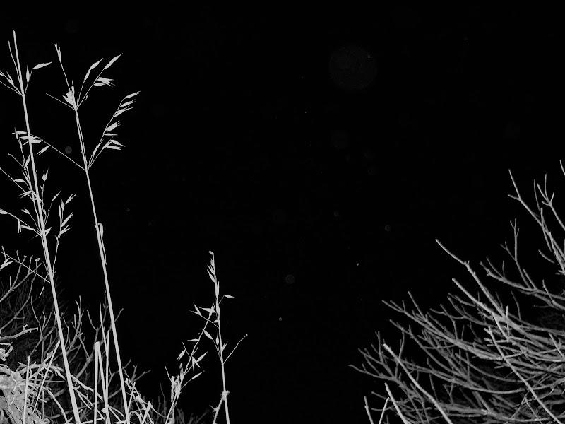 Dove sono le stelle? di cristina_bontempo