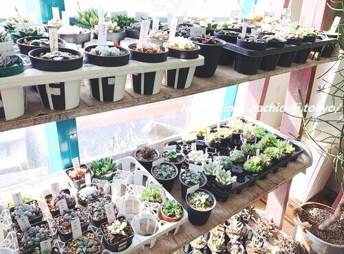 ガーデンメッセの多肉植物