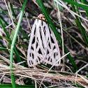 Arge Moth