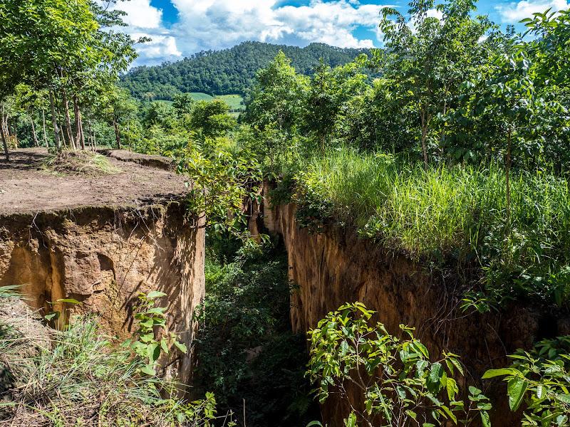 Dove la terra si spacca, la natura ricresce di anija
