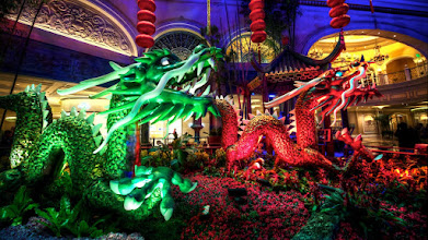 Photo: The Twin Dragons of Bellagio  I wonder what it's like to build your own dragon? The folks at the Bellagio built a lot of them to display for Chinese New Year. Moving, breathing, snorting smoke and snapping jaws. It's like a middle school science project on steroids. As much as I appreciate the constructions, it really blows me away at night when the color and light takes on a new character. The changing scenes of the Conservatory are part of the allure in Las Vegas that keeps calling me back for another visit.  Please visit the blog at http://williambeem.com