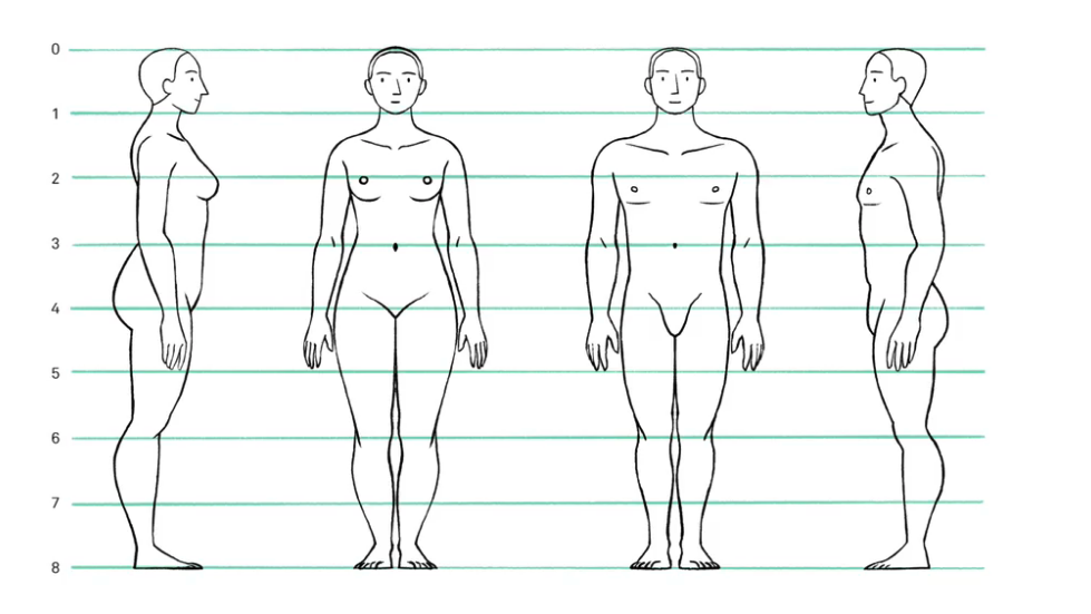 anatomy of body