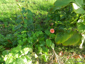 Photo: nu en dan nog een bloem