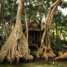 Witch hut by Tadas Jucys - Landscapes Forests ( pirates, hut, lush, indian, dominica, travel, caribbean, island, mystic, tree, witch, trees, place, river )