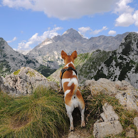 looking for the highest one by Renata Peterman - Animals - Dogs Portraits ( jack russell terrier, mountain, view, hiking, dog )