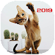 Download صور قطط حلوين 2019 - كيوت For PC Windows and Mac