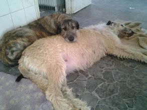 Photo: Hilla and mom Saaga (54days pregnant)