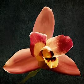 Maxillaria 2  by Joseph Vittek - Digital Art Things ( magenta, orchid, maxillaria, gold, blossoms )