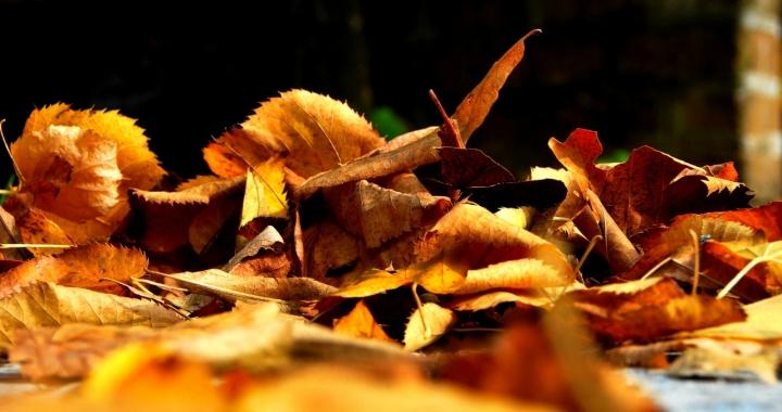 Autumn in.... Vallerano VT di Liliana