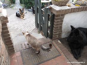 Photo: Sinjo wil wel de tuin in