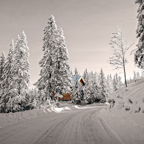 Driving Home for Christmas by Svein Hurum - Landscapes Forests ( norway winter forest )