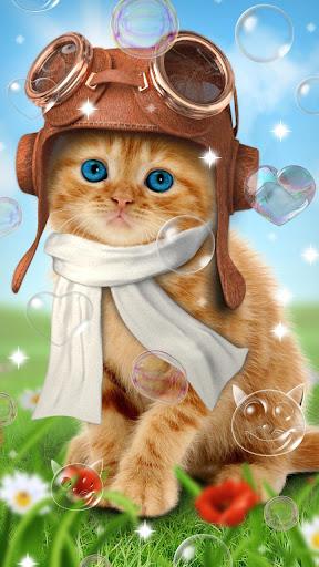 免費下載個人化APP|甜猫,动态壁纸 app開箱文|APP開箱王