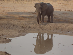 Photo: Elephant discovering his reflection