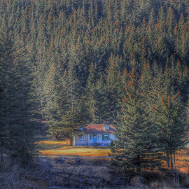 Tucked away  by Patricia Phillips - Buildings & Architecture Homes ( alaska homes seward pine trees )